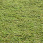 home sod grass